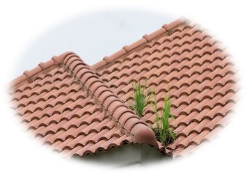 tile shingle