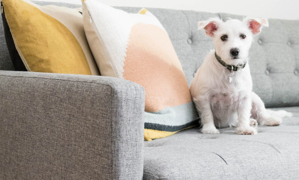 pet-friendly-featured